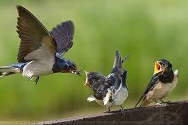 Jadilah Burung Sehat